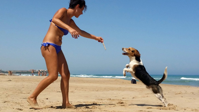 dog-dance-stare-in-forma-cane
