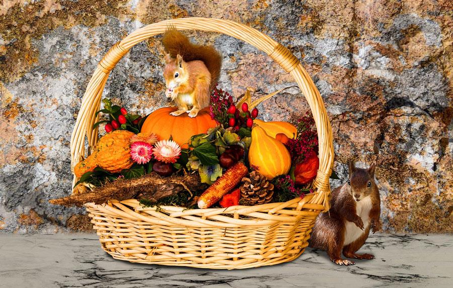 perdere-peso-cibo-colori-autunno
